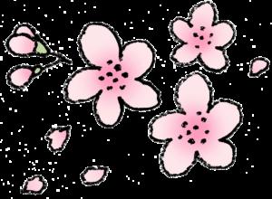 さくら・桜の花・春・ピンク・開花・フリーイラスト・無料素材